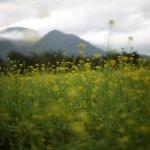 Photo of Ruisui Ranch