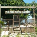Photo de The Reef Dive Resort