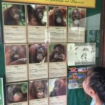 Photo de Sepilok Orangutan Sanctuary