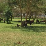 Photo of Lake Naivasha Simba Lodge