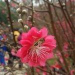 Photo de Baishuidai Park