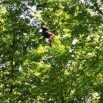 Photo of Go Ape Treetop Adventure Course