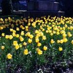 Photo of Botanic Gardens
