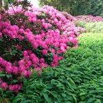 Planten un Blomen Foto