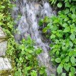 Mt. Dawei Natural Reserve Foto