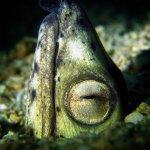 Foto de Scandi Divers