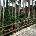 槟榔树集群