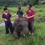 Photo of Ran-Tong (Save and Rescue Elephant Centre)
