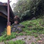 Photo de Mt. Emei Natural Ecology Monkey Reserve