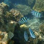 Perhentian Island Resort Foto