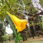 Photo of Nairobi Arboretum