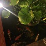 Golden Butterfly Villa Foto