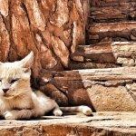 Photo of Sahara Tours 4x4