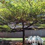 Photo of Cedars