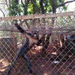 Photo of Nairobi Education Centre - Animal Orphanage