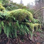 Photo of Quinault Rain Forest