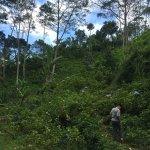 Munduk Moding Plantation Photo