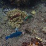 Photo of Sunlover Reef Cruises