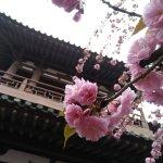 Photo de Qing Long Si