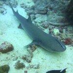 Photo of Seaventures Dive Rig
