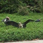 Photo of Chimelong Safari Park