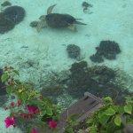 Photo of Sipadan Kapalai Dive Resort