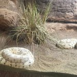 Photo of Phoenix Zoo