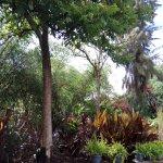 Photo of Zen Garden Restaurant