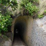 Photo of Tunnel Beach Track