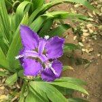 公园里的漂亮小花