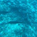 Photo of Whale Submarine Maldives