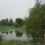 Photo de Jinji Lake Grand Hotel