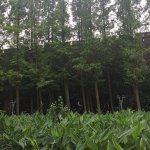 Photo of XuanWu Park