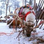 Photo de Village du Père Noël