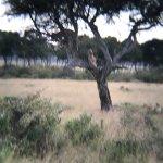 Mara Triangle Foto