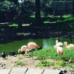 Photo of Fota Wildlife Park