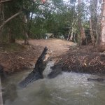 Photo of Hartley's Crocodile Adventures