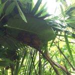 Photo of Tarsier Conservation Area