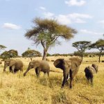 Photo of Bright African Safaris