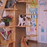 Photo of Cat Story Hotel