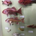 Queensland Museum South Bank Foto