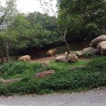 Photo of Chimelong Safari Park