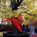 Photo of Duobao Pagoda of Xiangfan
