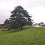 Photo of Auckland Domain