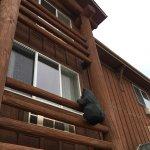 Foto di Kelly Inn West Yellowstone