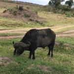 Photo of Lion Trails Safaris - Day Tours