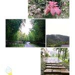 Photo de Huanxiu Xiaozhu Yangsheng Resort