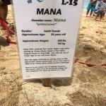 Photo of Laniakea Beach