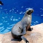 Photo of uShaka Sea World Aquarium