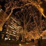 Foto de Jozenji-dori Avenue